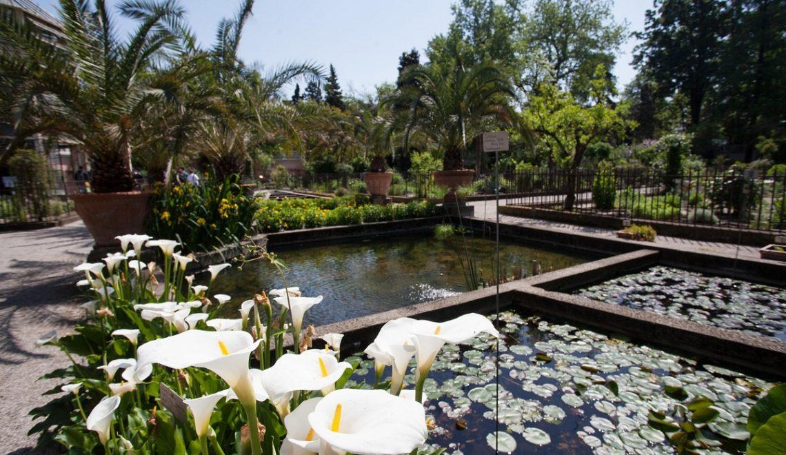 Orto Botanico di Padova: la biodiversità che ha incantato Goethe
