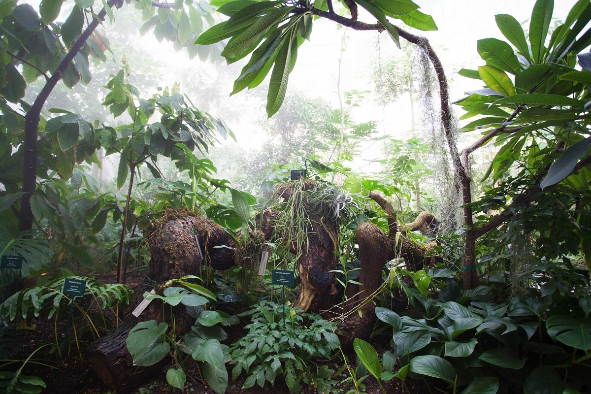 orto botanico padova goethe serra tropicale