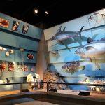 cosa fare a verona con i bambini notte al museo storia naturale