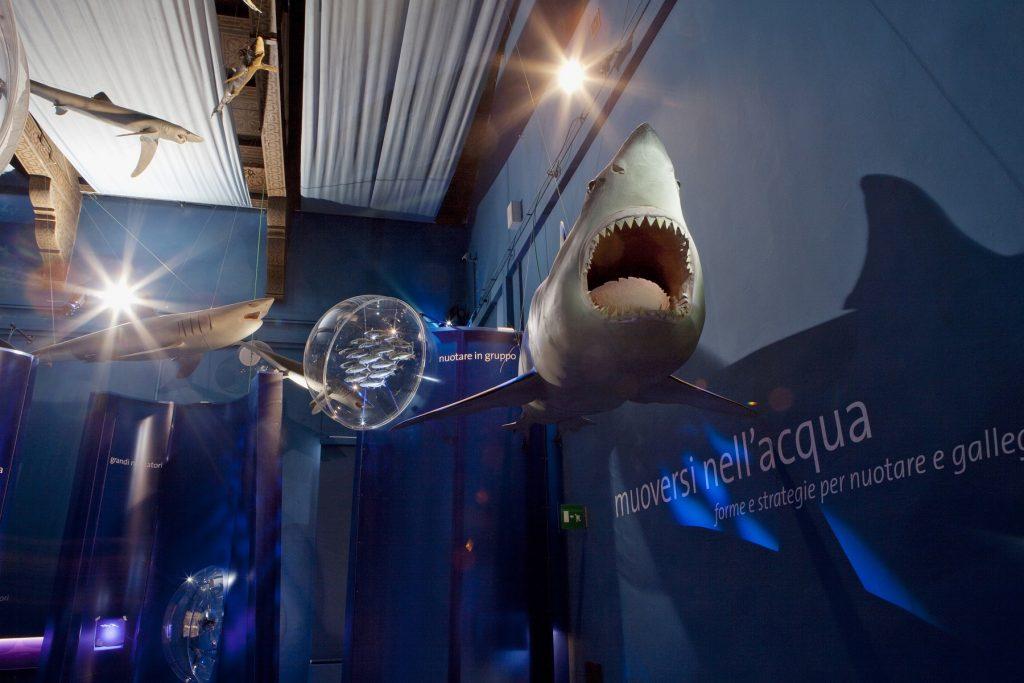 Migliori musei di Venezia Storia Naturale