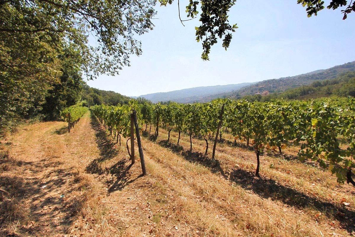 vacanza in cilento cantine vini tipici