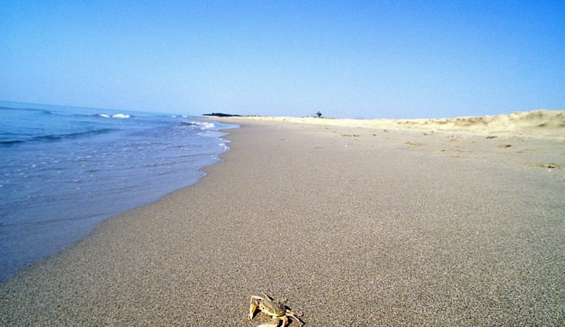 Sai perché il lido di Metaponto è la spiaggia più amata a Matera?