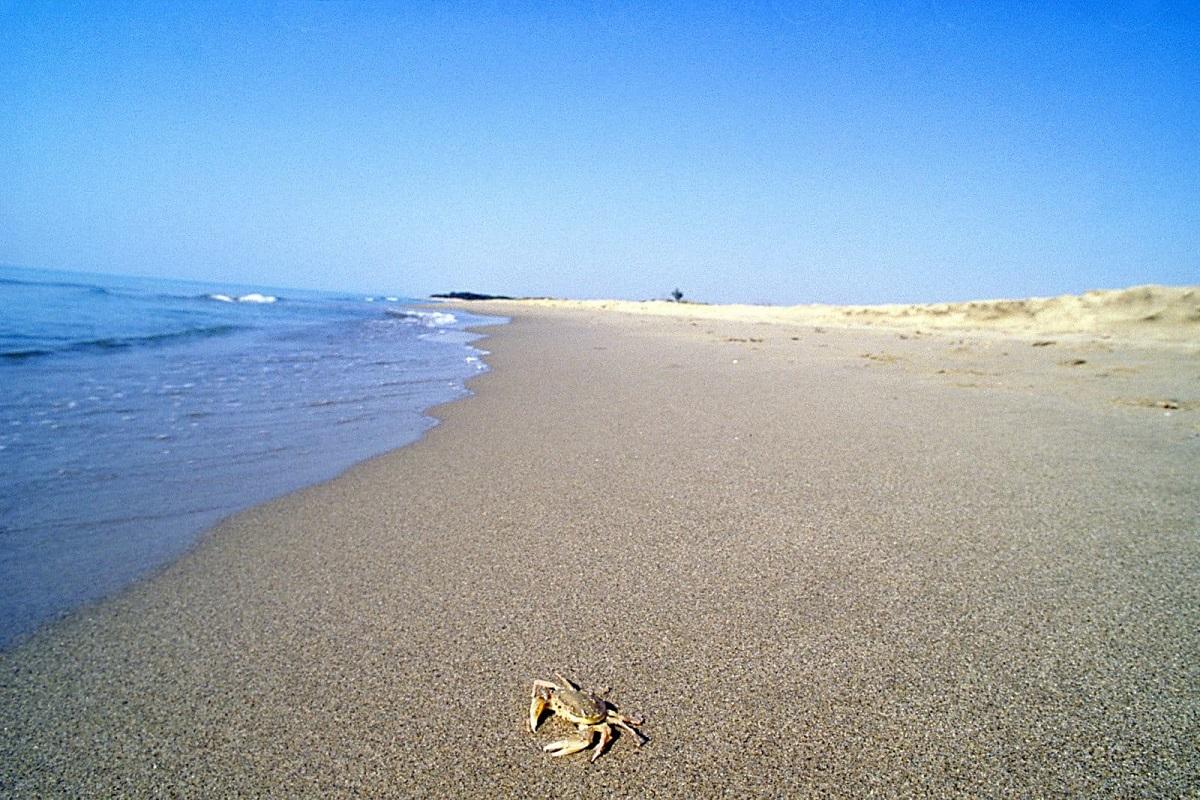 Sai perché il lido Metaponto è la spiaggia più amata a Matera? 3