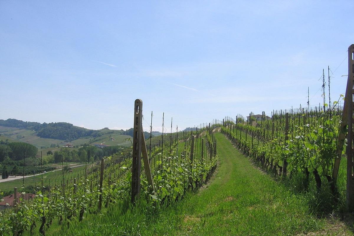Langhe, Roero e Monferrato un itinerario UNESCO - credits Lanthanum57