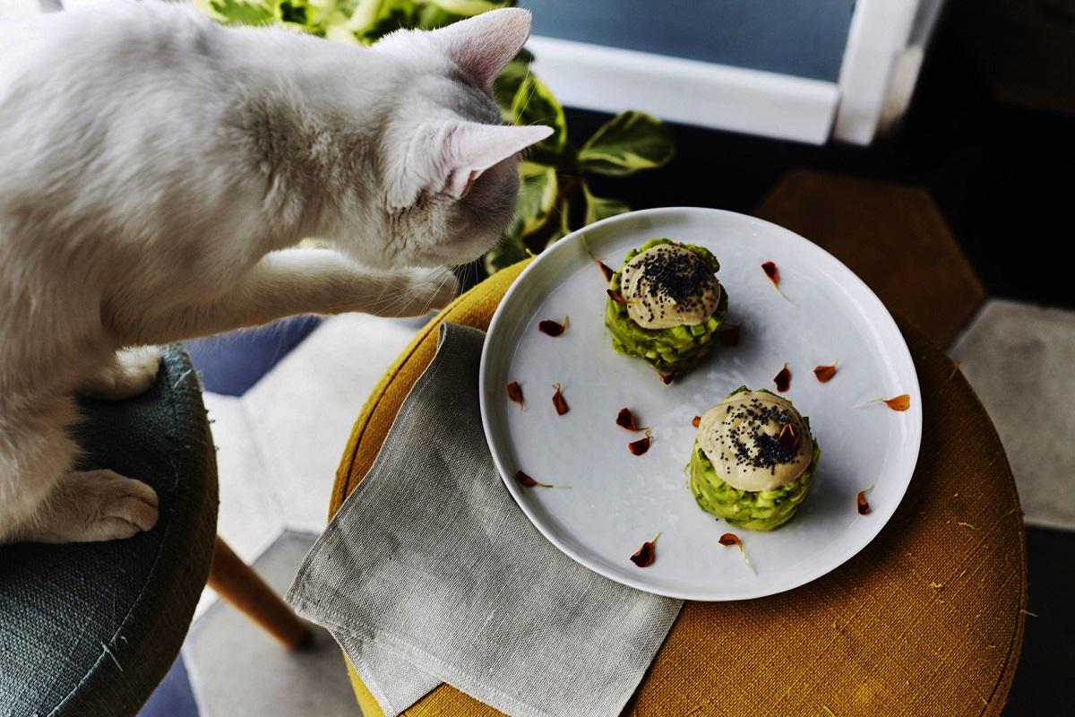 Migliori Ristoranti Vegetariani Vegani Roma Romeow Cat Bistrot 1