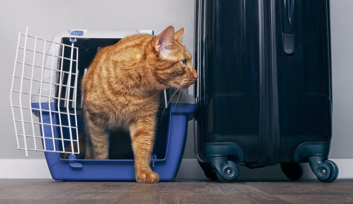 Posso portare il mio gatto in treno? Ecco come funziona